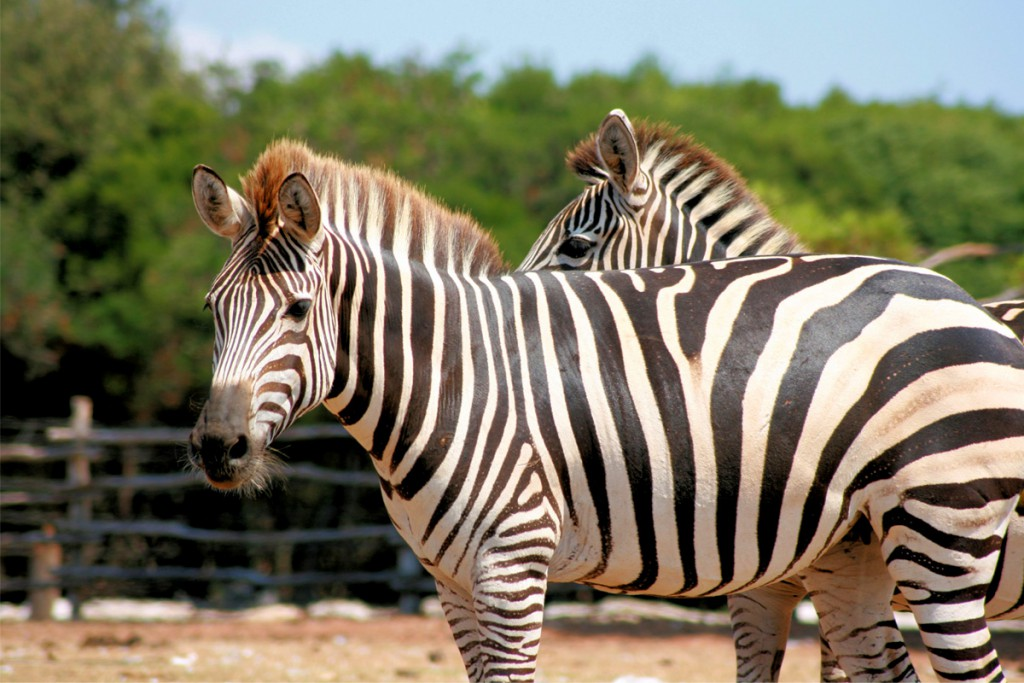 Day trips from Rovinj: Safari zoo at Brijuni National Park