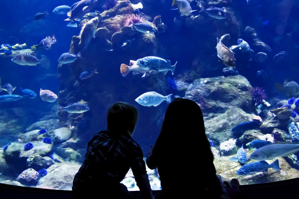 Things to do in Pula: Aquarium